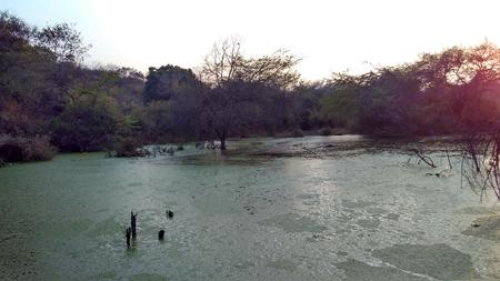 木と湖 写真素材 - 71296319