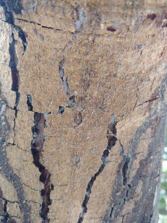 Sun dried tree bark close view