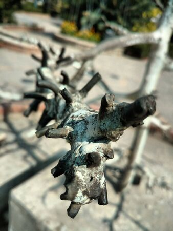 Old dried tree's branch in focus