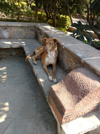 Dog sitting on a stone rock bench