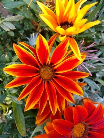 Orange color flower Stock Photo