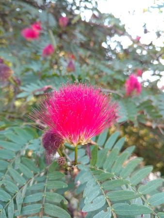 Touch me not flower Banco de Imagens