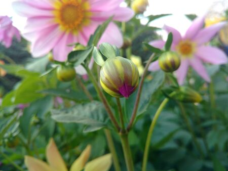 Flower Bud 写真素材