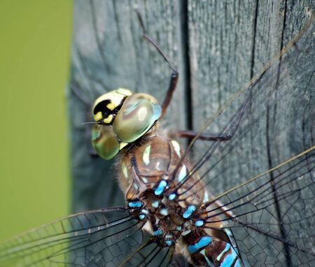 A macro of a Dragonfly on a piece of wood Stock Photo - 1564418