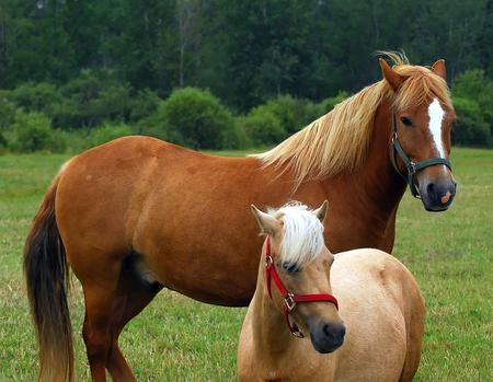Portrait of two horses, taken sideways