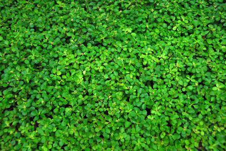 green vegetation: Green vegetation covering all the picture