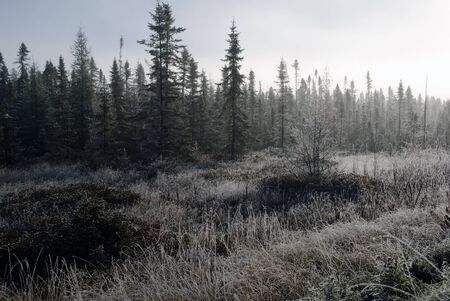 Creepy sunrise over a foggy and frozen forest Stock Photo - 8394805