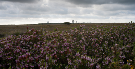 The satellite dishes of Goonhilly are visible on the horizon, with purple heather in the foreground. Фото со стока