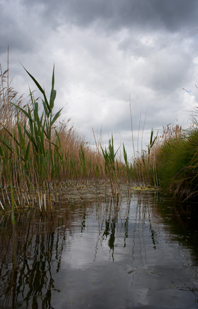 A cloudy sky is reflected in the water of a pond surrounded by tall reeds.