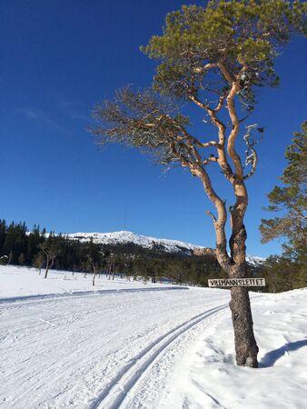 crosscountry: cross-country skiing tracks Stock Photo