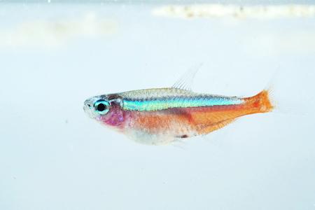 fishtank: Portrait of a Neon Fish