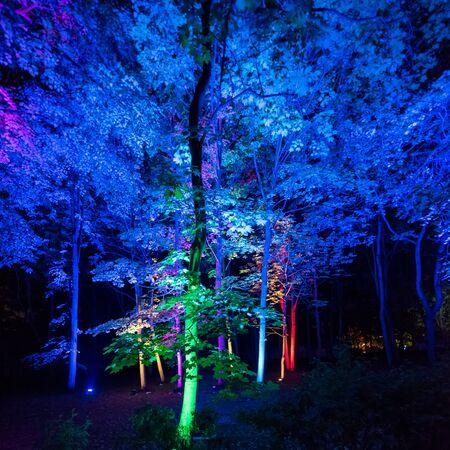 Árboles iluminados por la noche desde abajo con luces de colores - Azul