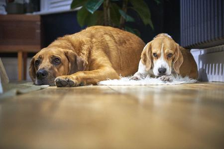dogs sleeping on wood floor