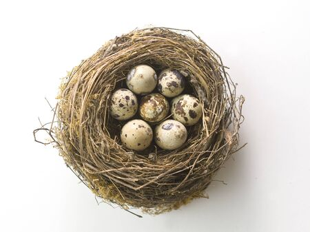 Birds nest with eggs on white background