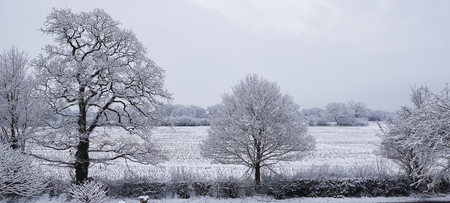 trees and fields covered in snow against grey sky