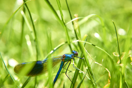 Dragonflyin grass