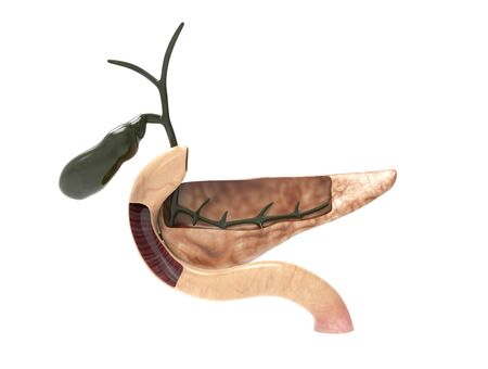 3D render image of pancreas - cut section