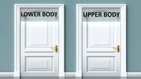 Lower body and upper body as a choice - pictured as words Lower body, upper body on doors to show that Lower body and upper body are opposite options while making decision, 3d illustration 写真素材