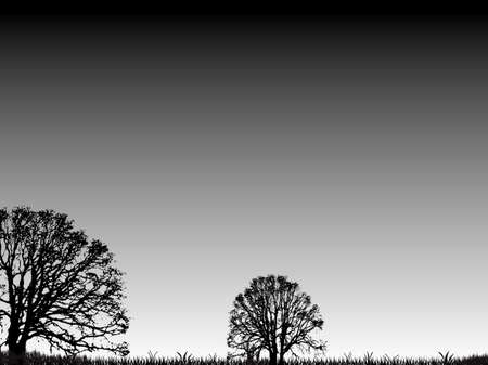 An abstract nature background with trees and grass with a grey sky in silhouette photo