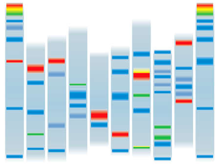 Illustration of a human dna ideal for scholl information on a clear background
