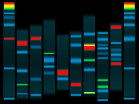adn humano: Ilustraci�n de un ADN humano en negro con relieve ADN cap�tulos ideal para las escuelas info  Foto de archivo