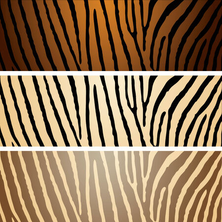 Collection of three zebra patterns with camouflage effect