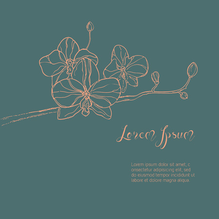 ink sketch: The branch of orchids flower. The hand drawn ink sketch. Vector Background with place for your text. Vector illustration. The branch in gentle pink color on gray-blue background.