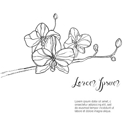 The branch of orchids flower on White Background. The hand drawn ink sketch. Vector Background with place for your text. Vector illustration.