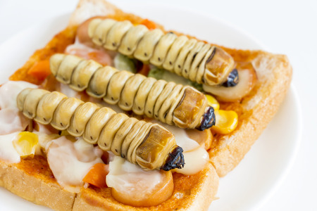 Food Insects: Worm beetle for deep-fried insects as food items. Bread sandwich made of fried insect meat on plate it is good source of protein which edible and delicious. Entomophagy concept.