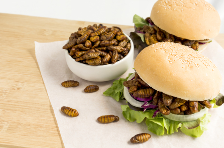 Fried worm insect or Chrysalis silkworm for eating as food items in bread burger with vegetable on wooden table, it is good source of protein edible for future. Entomophagy concept.