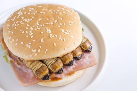 Food Insects: Worm beetle or Scarab Beetle for eating as food items in bread burger made of cooked insect meat with vegetable on plate is so rich in protein edible and delicious. Entomophagy concept.