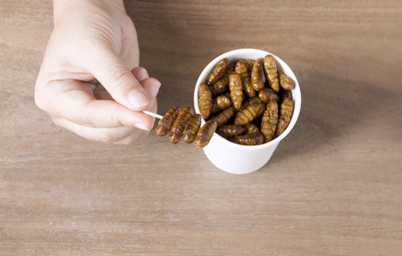 Woman's hand holding disposable cup which containing Silkworm Pupae (Bombyx Mori), Worm fried crispy for take-away. Food Insects for eating as food items is good source of protein edible. Entomophagy concept.