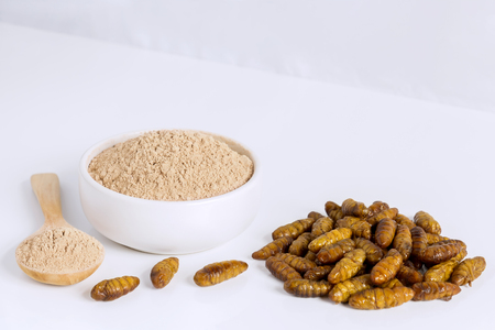 Silkworm Pupae (Bombyx Mori) powder. Insects flour for eating as food items made of cooked insect meat in bowl and spoon on white background is good source of protein edible for entomophagy concept. Stock Photo