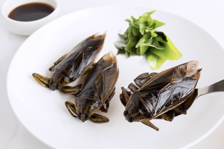 Giant Water Bug is edible insect for eating as food Insects deep-fried crispy snack on white plate and spoon with vegetable, it is good source of protein. Entomophagy concept.