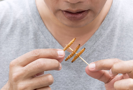 Food Insects: Man eating Bamboo Worm on wooden skewer. Bamboo Caterpillar deep-fried crispy for eat as food snack, it is good source of protein edible and delicious. Entomophagy concept.
