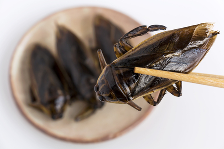 Giant Water Bug is edible insect for eating as food Insects deep-fried crispy snack on plate and chopsticks on white background, it is good source of protein. Entomophagy concept.