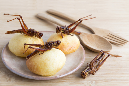 Grasshopper is edible insect for eating as food Insects deep-fried crispy snack and bakery baked on plate with wooden spoon on wood background, it is good source of protein. Entomophagy concept.