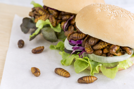 Silkworm Pupae (Bombyx Mori) insect fried for eating as food in bread burger with vegetable on wooden table background, it is good source of meal high protein edible. Entomophagy concept. Stock Photo