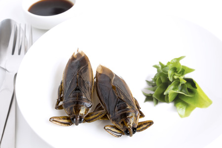 Giant Water Bug is edible insect for eating as food Insects cooking deep-fried crispy snack on white plate, spoon and fork with vegetable. It is good source of protein. Entomophagy concept.