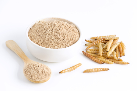 Bamboo worm powder. Bamboo Caterpillar flour for Insects eating as food edible items made of cooked insect meat in bowl and spoon on white background is good source of protein. Entomophagy concept.