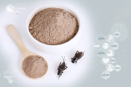 Cricket powder insect for eating as food items made of cooked insect meat in bowl on media icons nutrition background, it is good source of protein edible for future food and entomophagy concept. Stock Photo