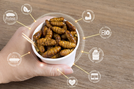 Silkworm Pupae insects for eating as food in disposable cup with icon media nutrition concept on wood background. Chrysalis silkworm snack deep-fried for take out, it is good source of protein edible.