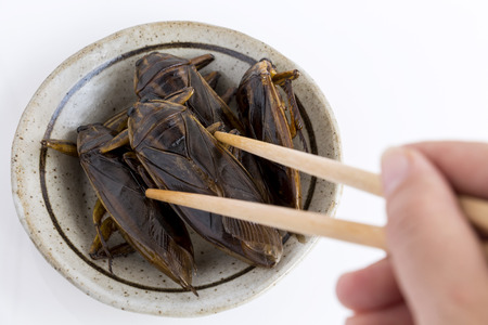Food Insects: Woman hand holding Giant Water Bug is edible insect for eating as food Insects deep-fried crispy snack with chopsticks on plate, it is good source of protein. Entomophagy concept.