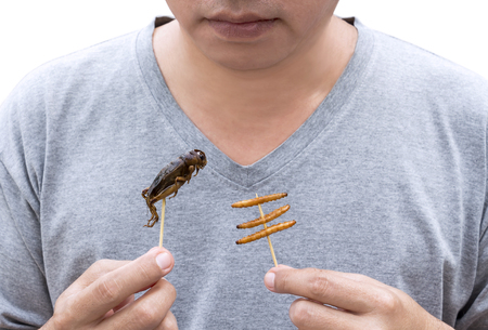 Food Insects: Man eating Bamboo Worms and Crickets insect deep-fried crispy for eat as food snack, it is good source of protein edible and delicious for future food. Entomophagy concept.