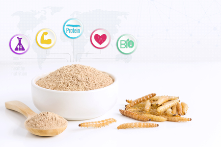 Bamboo worm powder items made of cooked insect meat for eating as food edible. Bamboo Caterpillar and media icon nutrition on white background, it is good source of protein. Entomophagy concept.