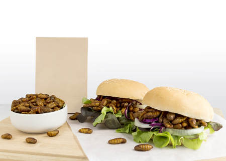 Food Insects: Silkworm Pupae insect deep-fried for eating as food in bread burger with vegetable and package bag on wooden table, it is good source of protein edible. Entomophagy concept.