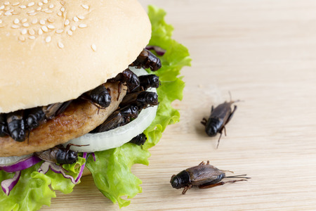 Crickets insect for eating as food items in bread burger made of fried insect meat with vegetable on wooden table it is good source of meal high protein edible for future food and entomophagy concept. Banco de Imagens