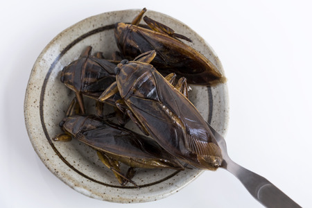 Food Insects: Giant Water Bug for eating as food. Insect items cooking deep-fried snack on plate with fork on white background, it is good source of protein edible. Entomophagy concept. 스톡 콘텐츠