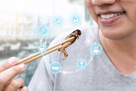 Food Insect: Man's hand holding chopsticks eating Cricket insect deep-fried as food on restaurant and icons media nutrition, it is good source of meal high protein edible. Entomophagy concept.