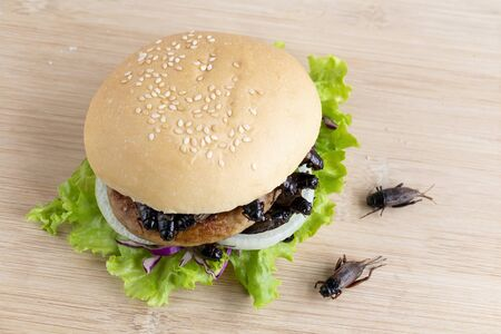 Crickets insect for eating as food items in bread burger made of fried insect meat with vegetable on wooden table it is good source of meal high protein edible for future food and entomophagy concept.